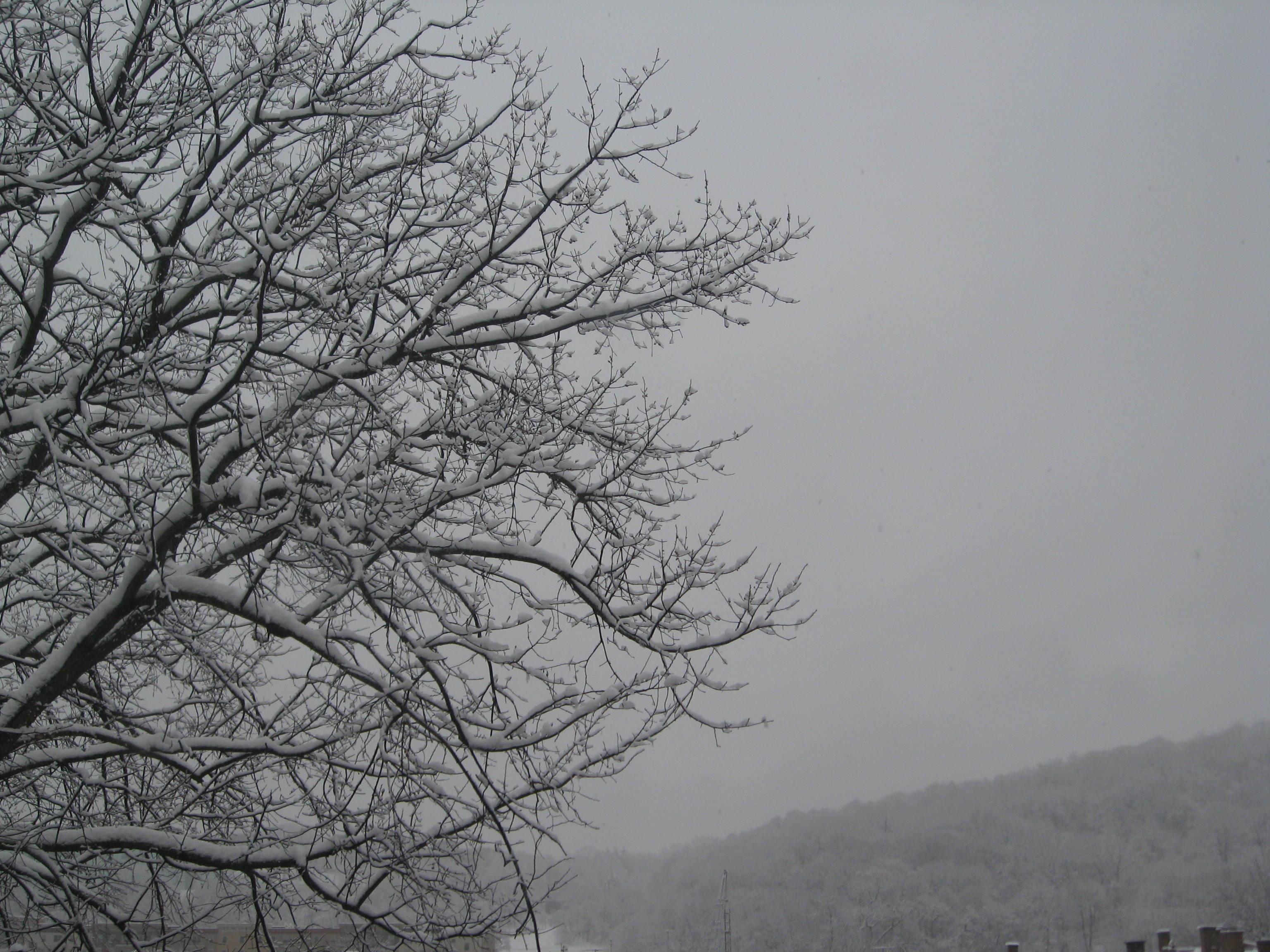 Snowy tree early 2012