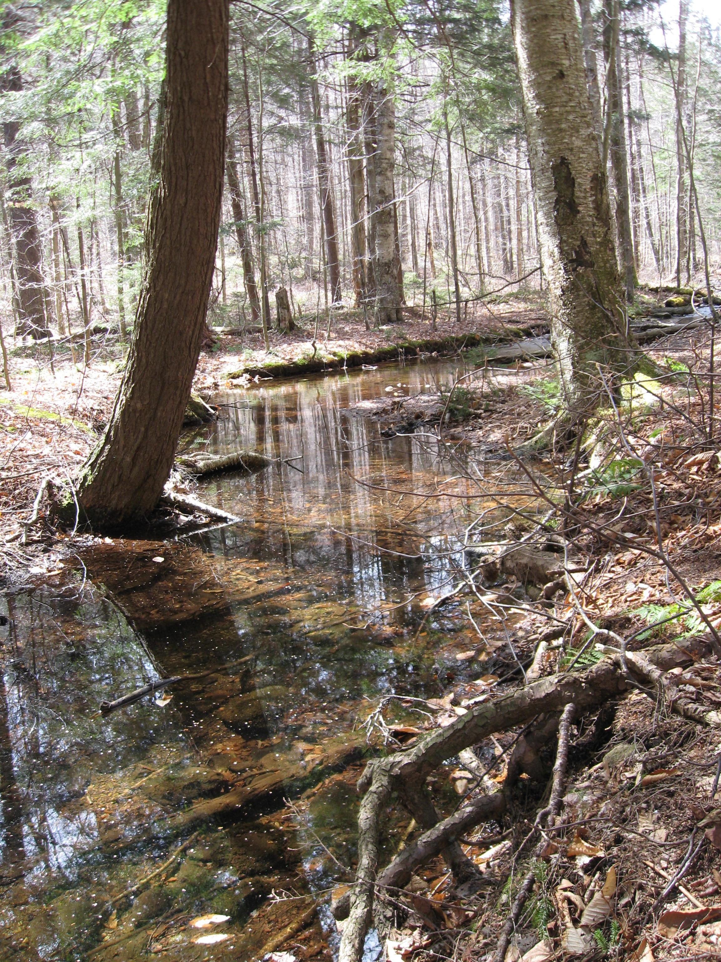 Adirondack Park creek, near Jockeybush and Good Luck Lake