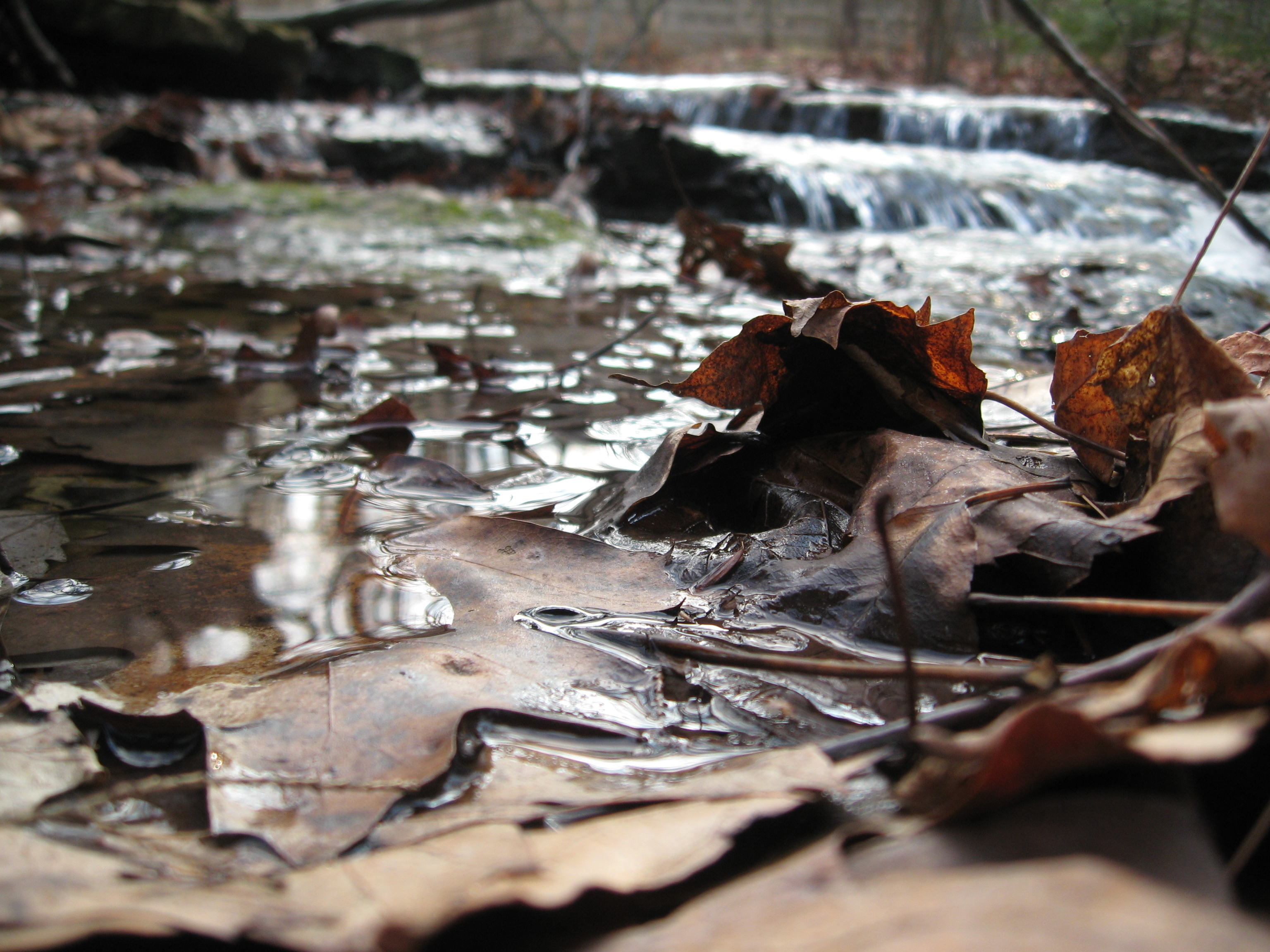 Along the Long Path at John Boyd Thacher Park: fall leaves color streams that are just above freezing.