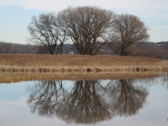 Almost-official-winter reflections in the Mohawk River, along Niskayuna Bike Path