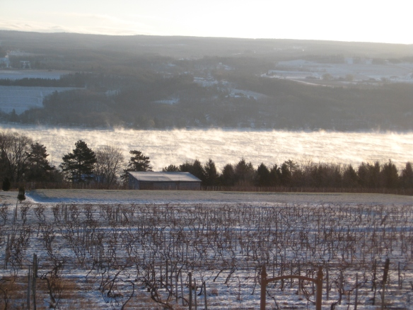 Finger Lakes vineyard, with Seneca Lake steaming on a 5 degree below zero morning.