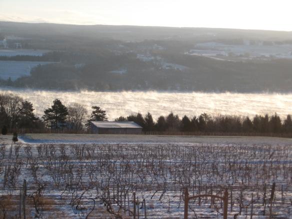 Finger Lakes vineyard, with Seneca Lake steaming on a 5 degree below zero morning.