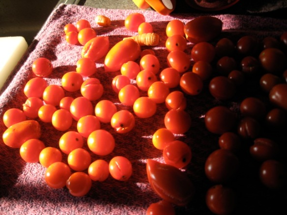 Cherry tomatoes spill over the counter top.