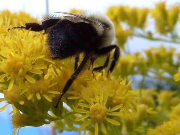 Morning bee warming up at Partridge Run.