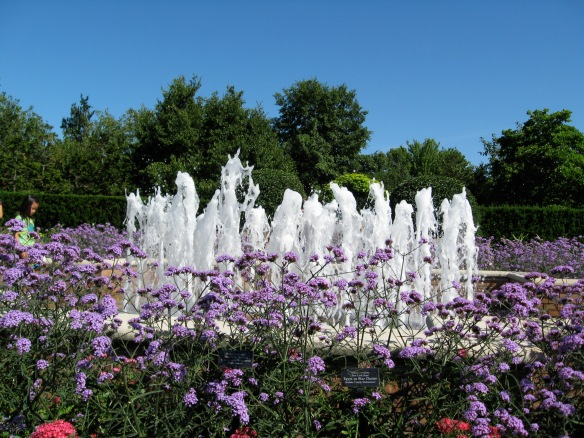 A taste of full summer with fountains: Brazilian vervain (verbena), which butterflies come to visit.