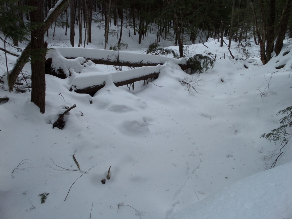 Limbs buried in deep snow at a creek, Partridge Run.