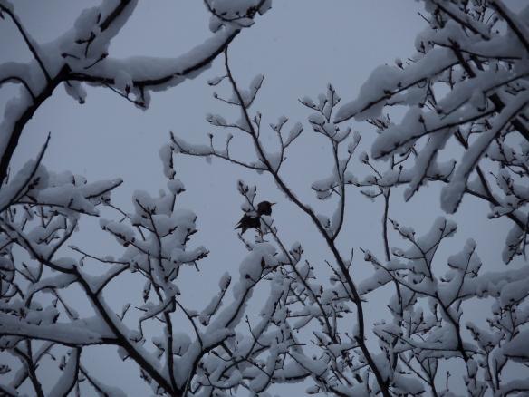February bird in snow, outside my window