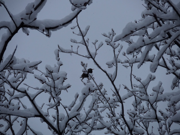 February bird in snow, outside my window
