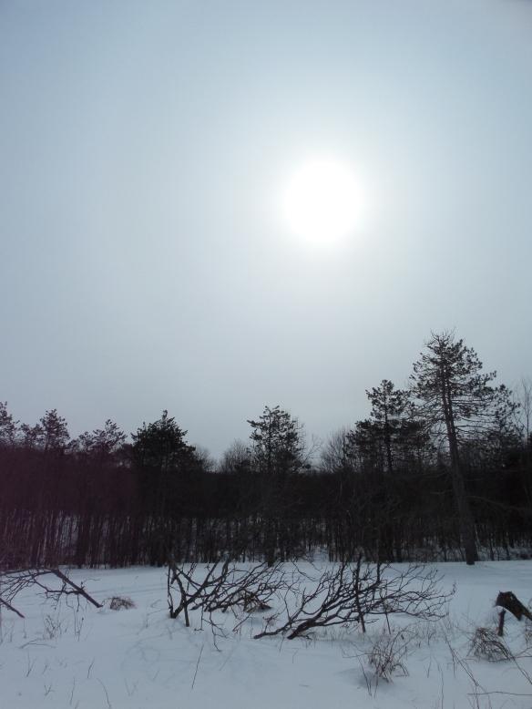 Winter sun, and winter sun, and winter sun.