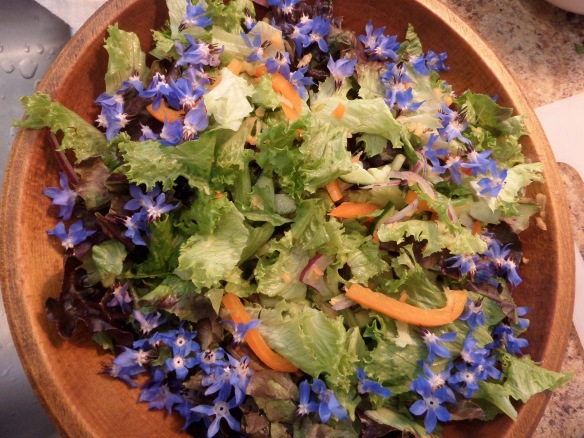 Striking and delicate blue borage flowers.